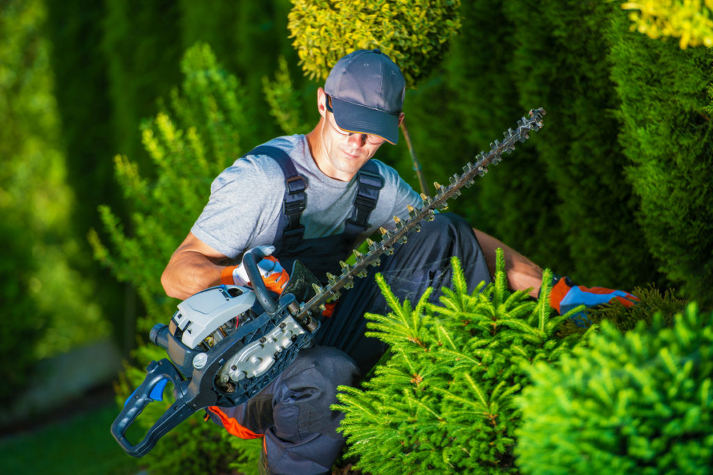 Shrub Trimming & Removal