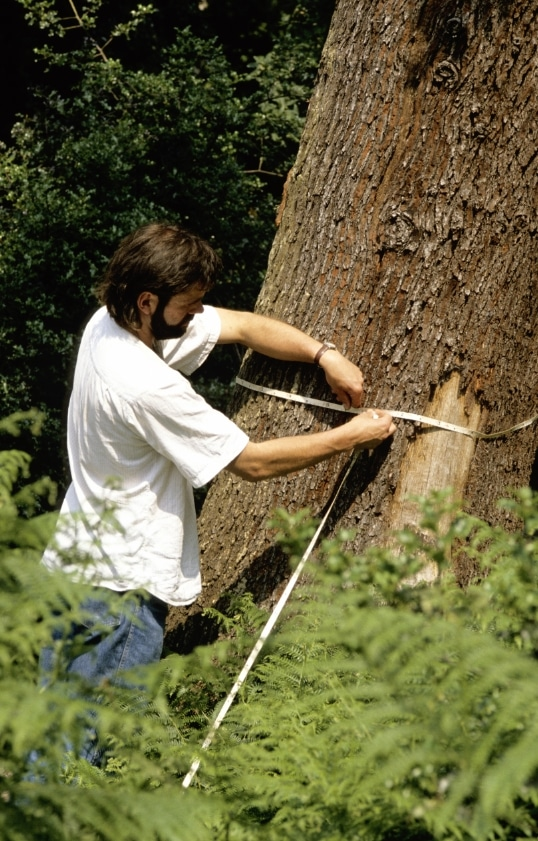 Tree Maintenance in Erie PA