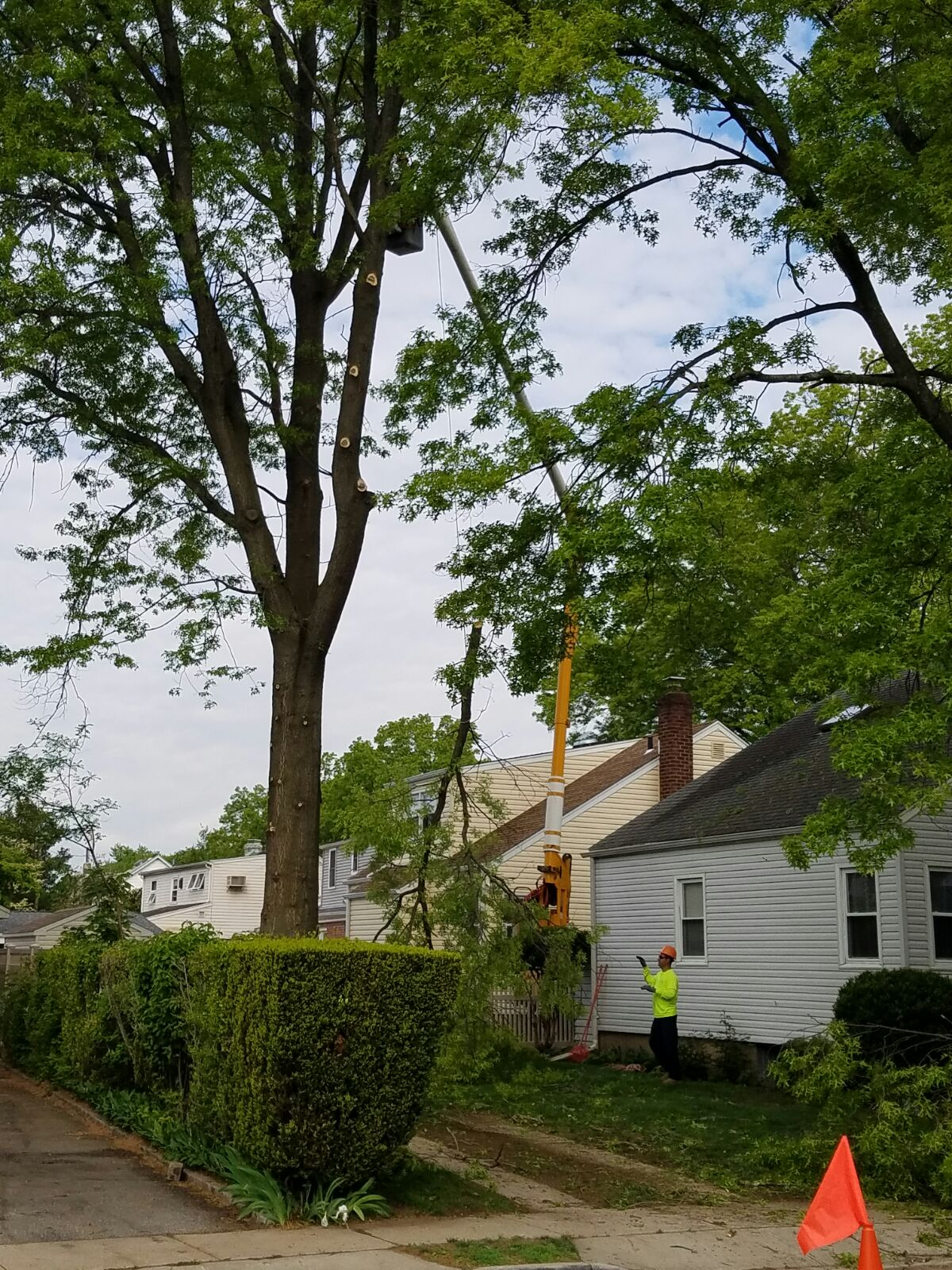 Tree Removal Service in Erie