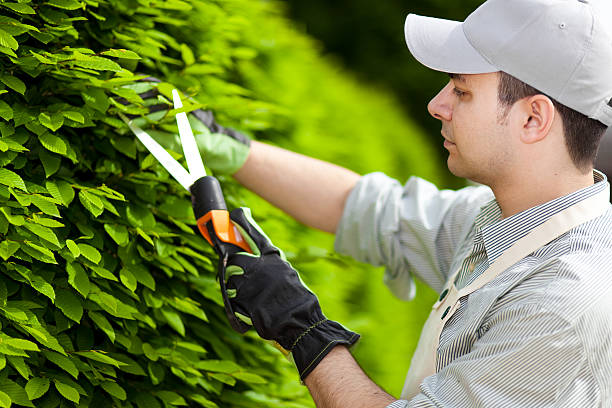 Tree Pruning & Tree Maintenance Erie, PA