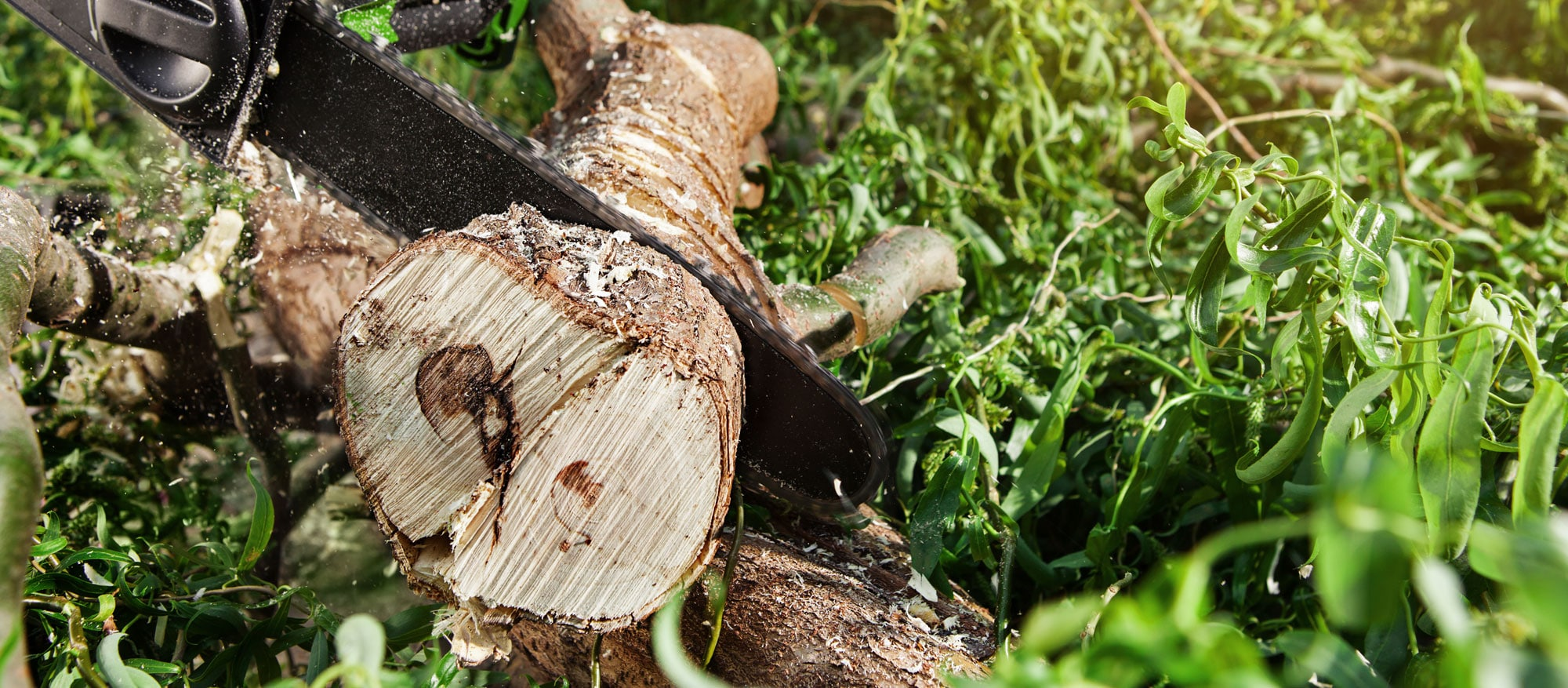 Professional Tree Cutting & Tree Removal
